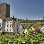 Rhine Riesling Vineyards