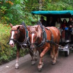 Horse Carriage, Neuschwanstein © Travel Signposts