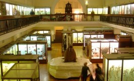 Horniman Museum Interior - Image by Simon and Ashley..