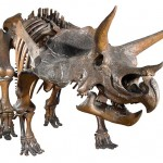 Age of Dinosaurs © Natural History Museum