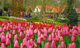 Keukenhof – The World's Most Beautiful Spring Garden