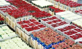 A Unique Visit to FloraHolland Aalsmeer