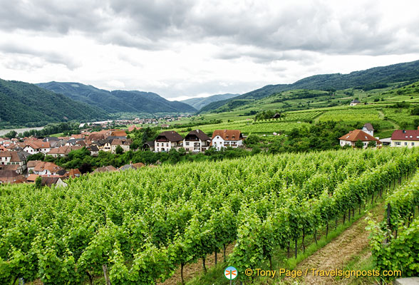 Vineyards of Weissenkirchen