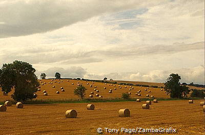 Bales of hay dotting the landscape [Durham - England]