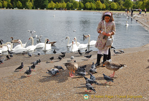 Bird feeding at the Round Pond, a favourite activity with kids