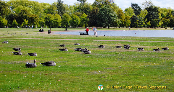 Birds of Kensington Gardens