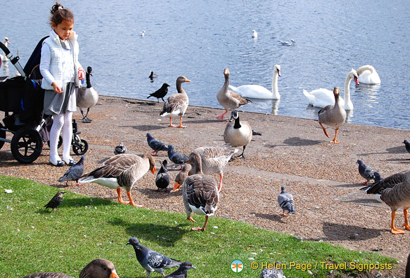 Bird feeding at the Round Pond
