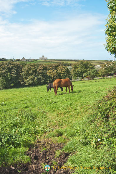 Horses in a nearby paddock