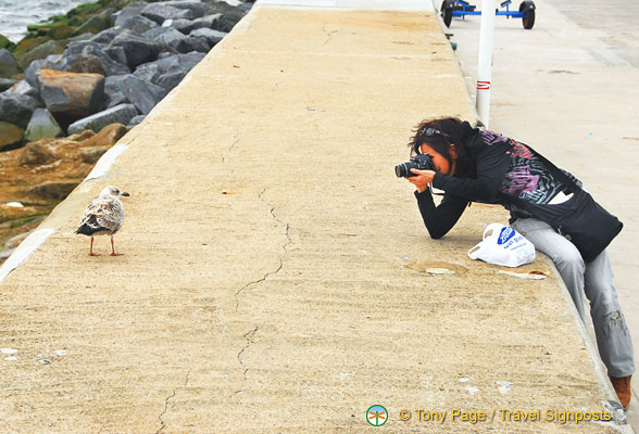 Taking a close-up of this seagull on Haldon Pier