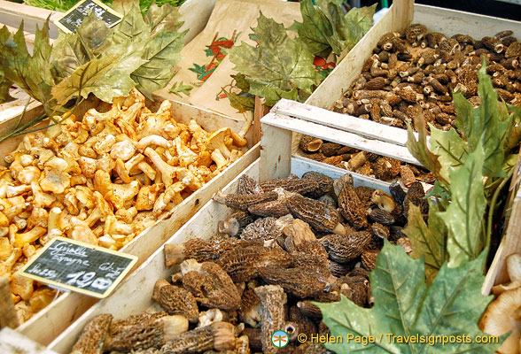 A variety of fresh mushrooms