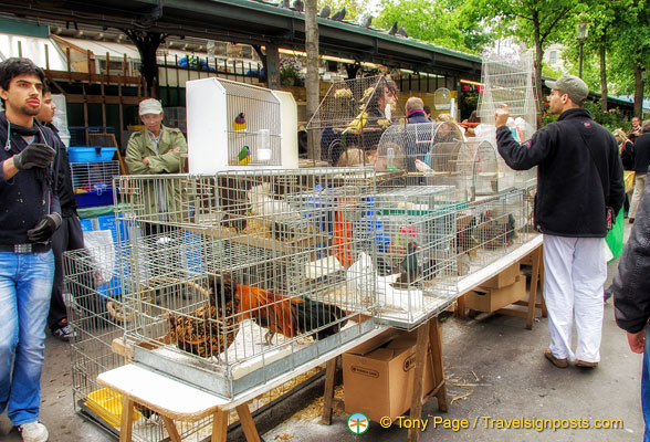 The Marché aux oiseaux only operates on Sundays