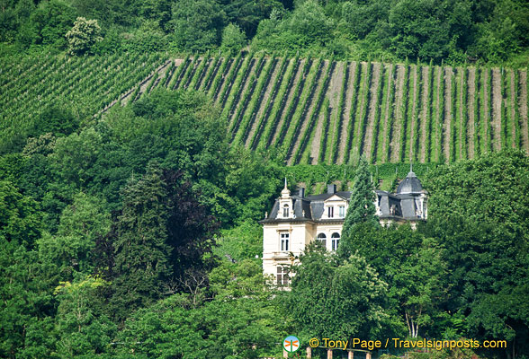 Beautiful vineyards of Traben-Trarbach