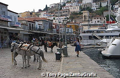 Donkeys waiting for passengers