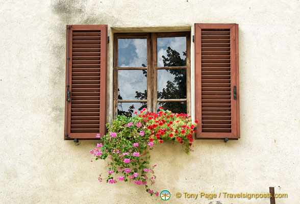 Window with pretty flowers