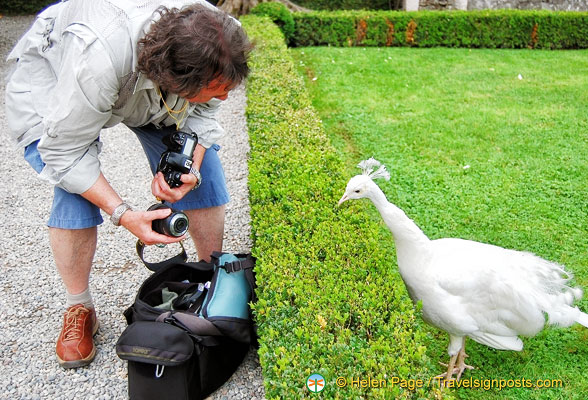 Tony answering photography questions from this peacock