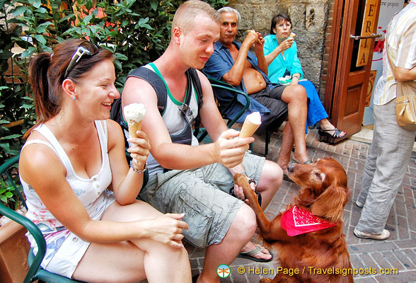 Even the pooch is a San Gimignano gelato fan