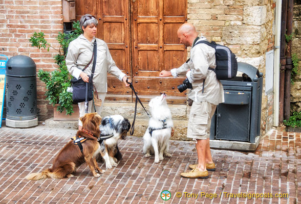 Meeting of the dogs in San Gimignano