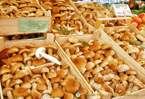 Mushrooms from the Treviso region