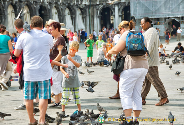 Pigeons in San Marco - a tourist attraction
