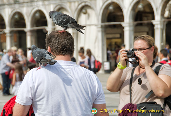 A pigeon act
