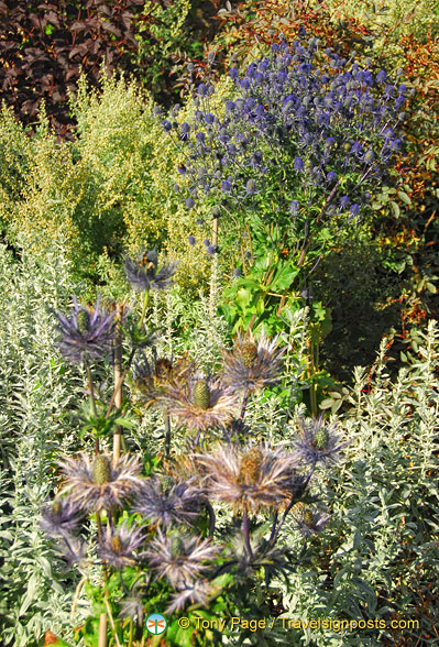 There are hundreds of plant varieties in the Castle of Mey Gardens