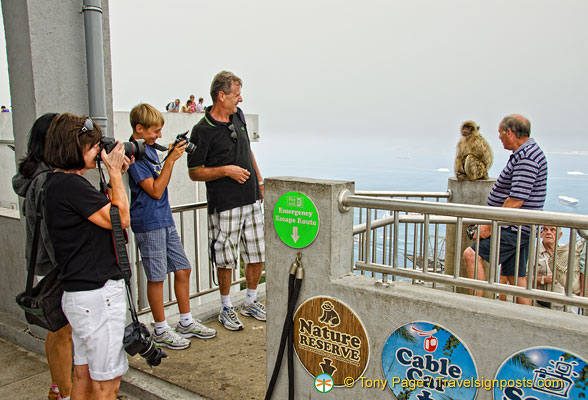 Visitors fascinated by the barbary ape