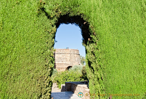 Looking through one of the thick hedges at the Alhambra