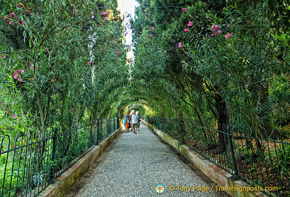 Promenade of the Orleanders: As the name suggests, this long path is lined with oleander.