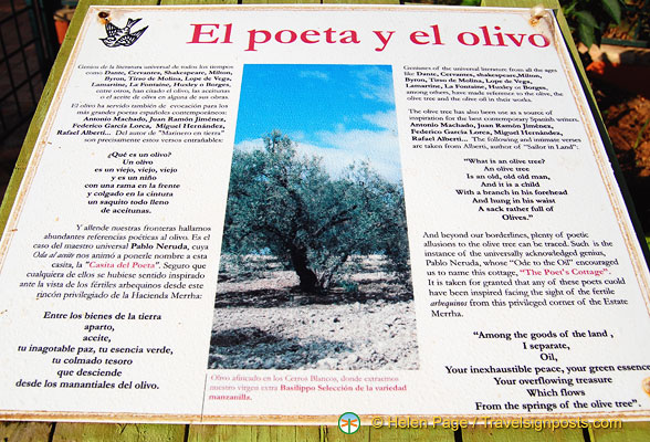The olive tree is a source of inspiration for many writers