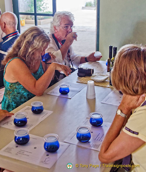 Tasting arbequina extra virgin olive oil at Basilippo