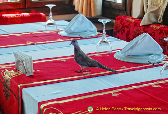 This bird is a regular visitor to this restaurant