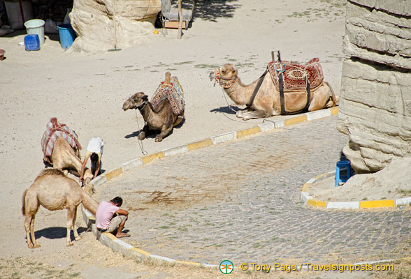 Anyone for a camel ride?