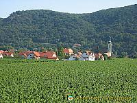 86% of wine grown in Austria are white