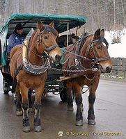 Horse and carriage rides in Hohenschwangau