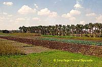 Farmland around Mit Rahina village - Memphis