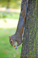 A stretched squirrel