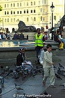 Pigeon feeding at Trafalgar Square