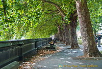 A nice tree-lined pavement