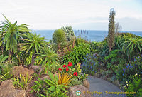 The very colourful Minack Gardens