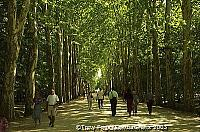 This plane tree-lined avenue leads to the elegant Chateau de Chenonceau  [Chateaux Country - Loire - France]