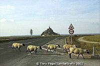 I needed something in the foreground and these sheep obliged [Mont-St-Michel - France]