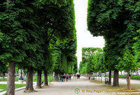 Tree-lined path in Jardin du Luxembourg