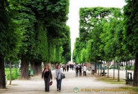 Tree-lined paths in the Luxembourg garden