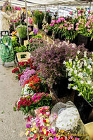 Flower stall at Marché Saxe-Breteuil