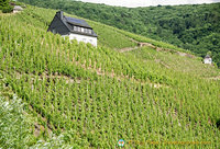 Moselle Valley vineyards