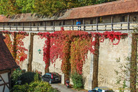 Fall colours on the Rothenburg wall
