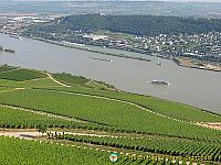 View of the Rhine vineyards from the Statue of Germania viewpoint