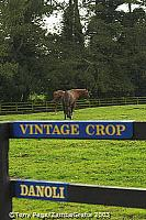 Vintage Crop and Danoli, two champion horses of The National Stud