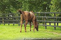 Even if you are not interested in horsebreeding, a tour of The National Stud is well worth doing