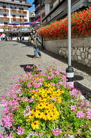 Me enjoying the beautiful flowers in Cortina d'Ampezzo